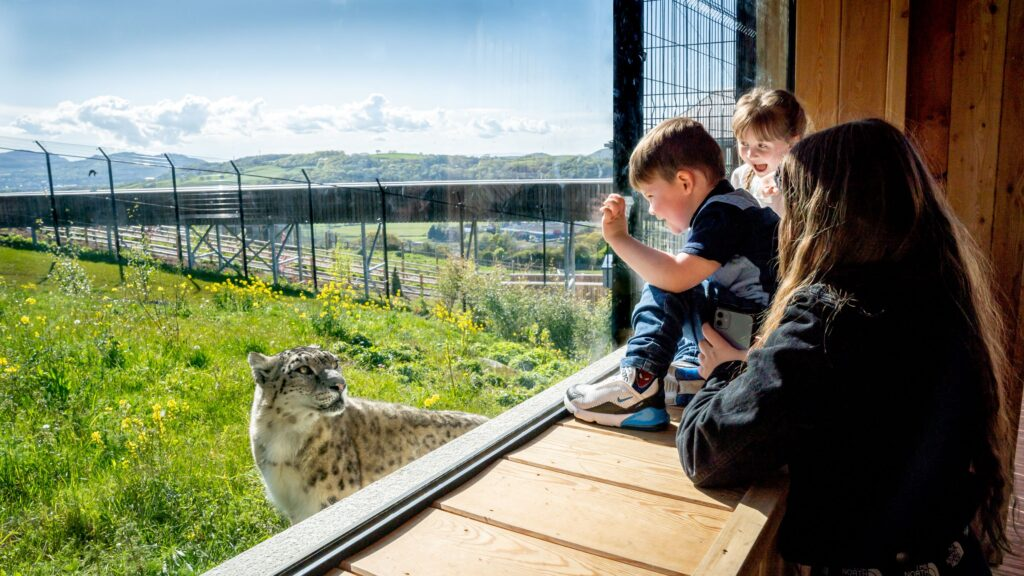 Children and snow leopard close-up